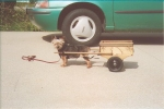 Yorkie with cart